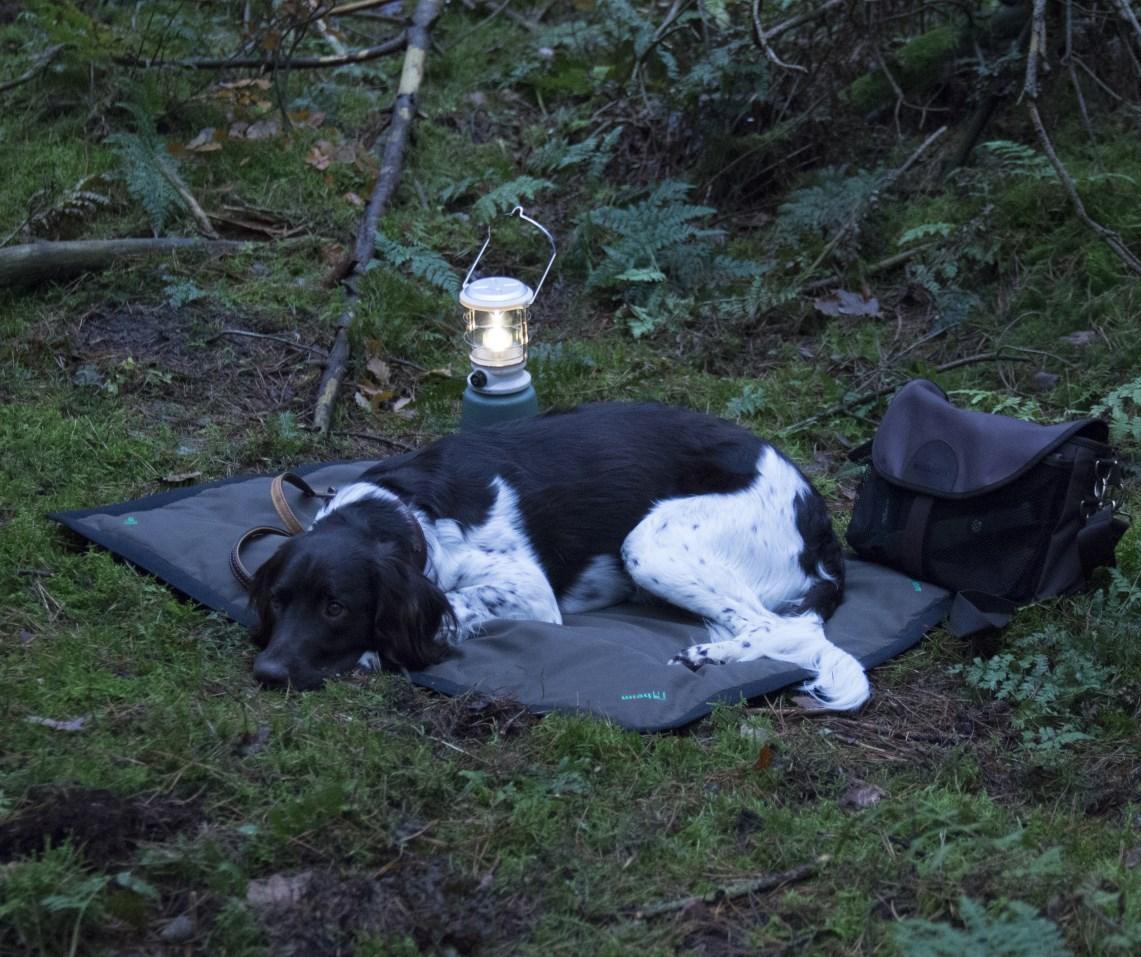 Jagdhund auf Heim Hundedecke