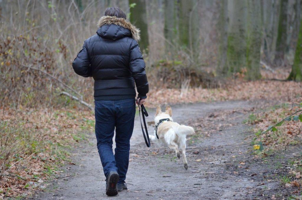 Wanderer und ihre Hunde können das Wild verstören