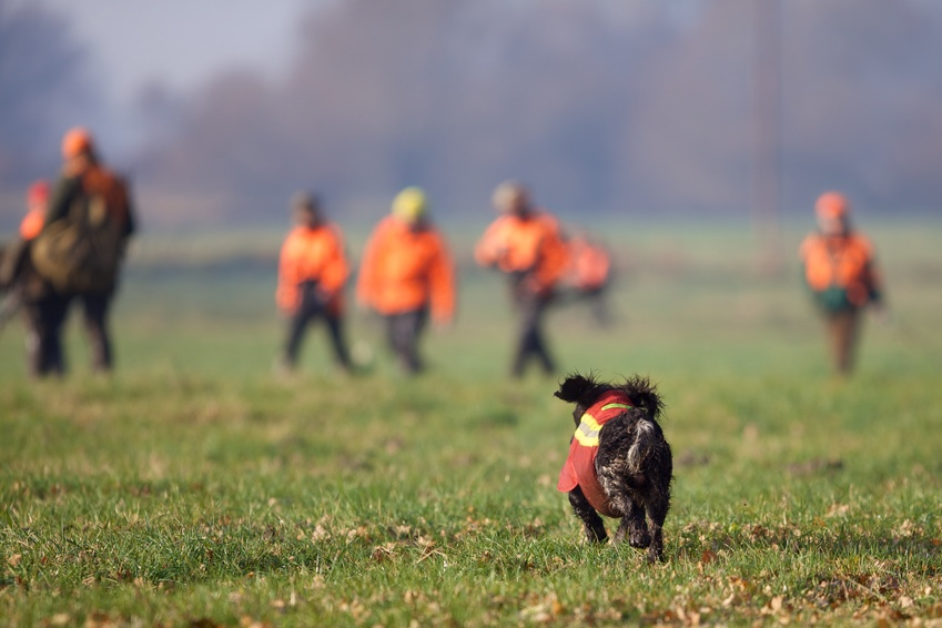 Hund entlaufen auf der Jagd