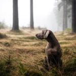 Was tun, wenn der Hund entlaufen ist?