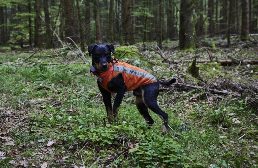 Hundeortungsgerät unabdingbar für die Hundesuche