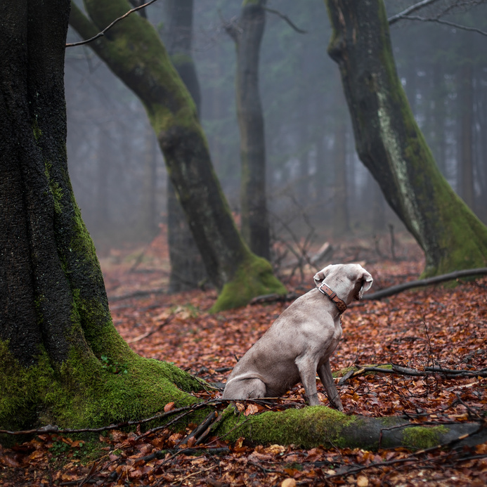 Großer Ratgeber - Hund entlaufen, was tun?